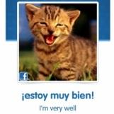 Cat spanish 02